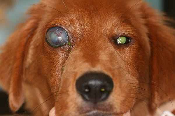 Chronic Glaucoma.