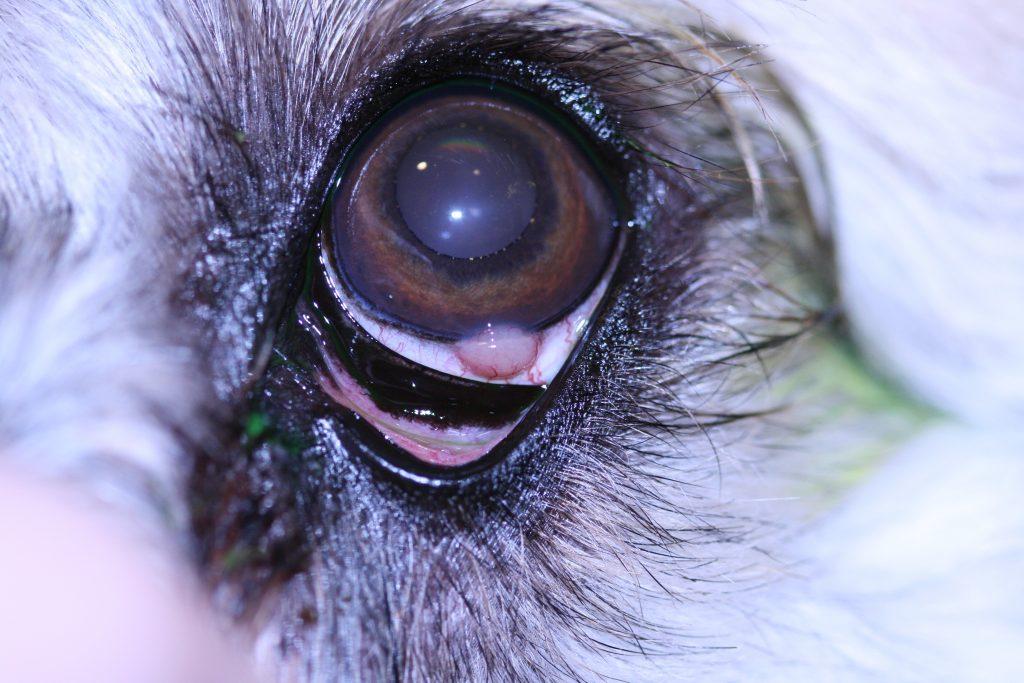 Ophthalmology Photo 1