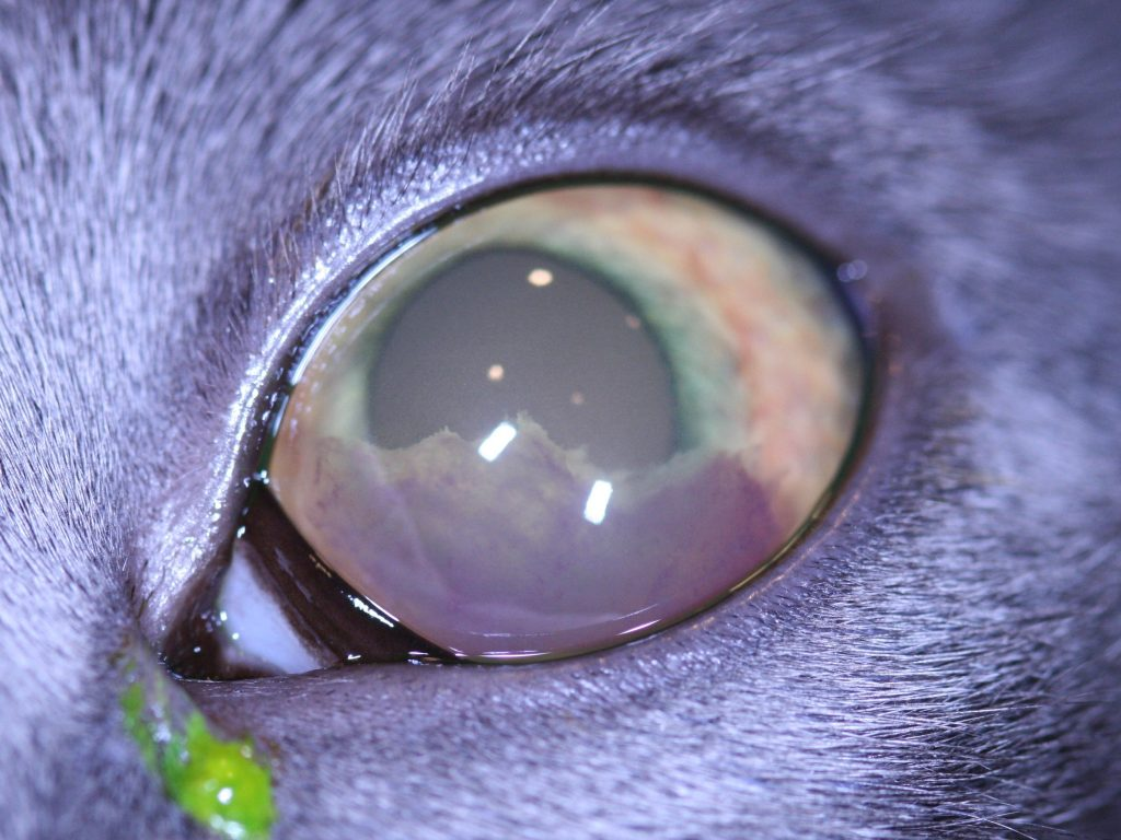 Ophthalmology Photo 2